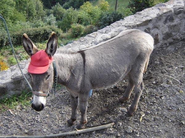 Donkey01039 - Copy