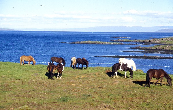 Horses15B