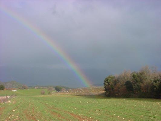 Rainbow03658